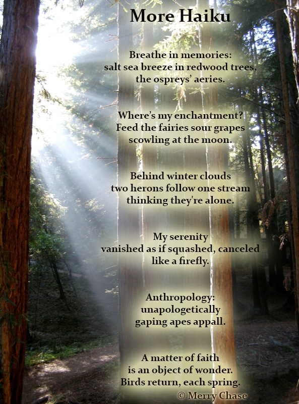 more haiku